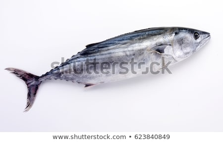 Single tuna fish Stock photo © digitalr