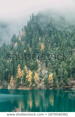 tree trunk submerged in water Stock photo © sirylok