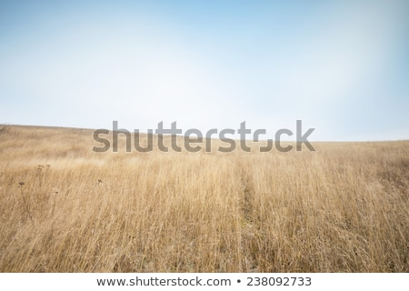 Dry grass field scene Stock photo © ryhor