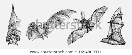 вампир · изображение · искусства · зубов · спать · Spider - Сток-фото © ustofre9
