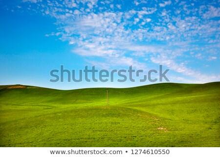 зеленый пшеницы трава синий телефон полюс Сток-фото © billperry