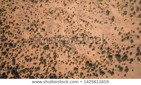 Woestijn vegetatie shot water boom landschap Stockfoto © kitch