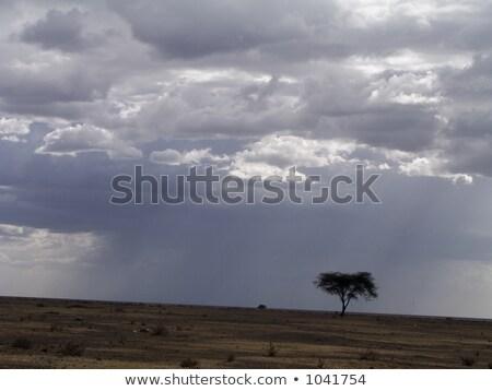 mgły · Afryki · wcześnie · niebo · drzewo - zdjęcia stock © backyardproductions