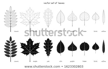 Autunno alberi dettaglio foglie illustrazione primavera Foto d'archivio © Slobelix
