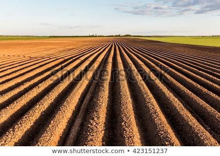 Campo preparato agricola crescere up Foto d'archivio © jarin13
