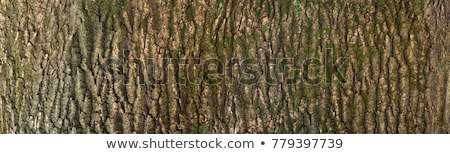 The texture of tree bark with moss Stock photo © Fesus