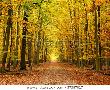 Trees turning to fall colors in the countryside Stock photo © sarahdoow