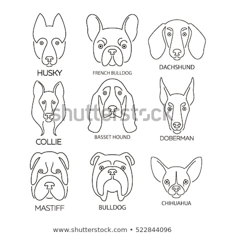 Dog breed dachshund silhouette vector logo design template Stock photo © mcherevan