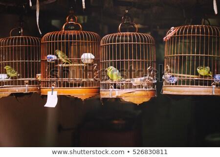 birds in cage in bird market stock photo © dinozzaver