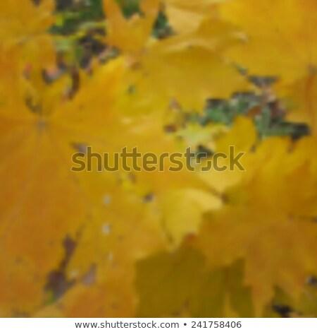 colorido · borroso · gradiente · brillante · colores - foto stock © gladiolus