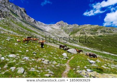 austrian alps under blue skies stock photo © ultrapro