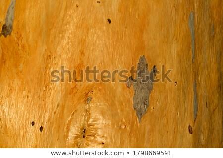 kaba · ağaç · havlama · doku · ahşap - stok fotoğraf © silkenphotography
