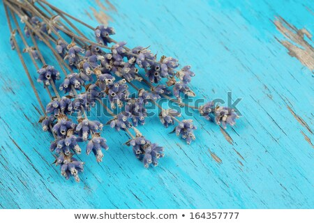 lavender flowers on a worn blue wooden surface stock photo © nito