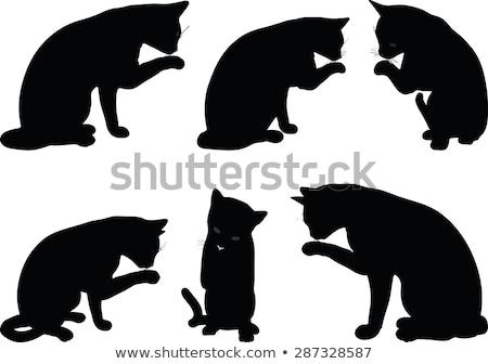 вектора изображение кошки силуэта очистки лапа Сток-фото © Istanbul2009