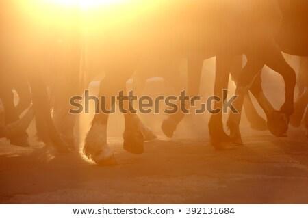 Pyłu spaceru konia piasku płytki Zdjęcia stock © FOTOYOU