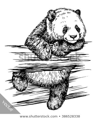 giant panda or ailuropoda melanoleuca illustration stock photo © morphart