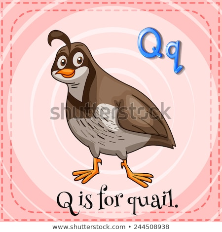 Flashcard Letter Q Is For Quail Vector Illustration Daniel Cole