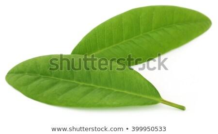 гвоздика листьев белый чаши дерево Сток-фото © bdspn
