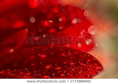 Vermelho fresco flores tabela restaurante óculos Foto stock © dmitroza