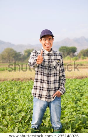 Gazda hüvelykujj felfelé megművelt szójabab mező Stock fotó © stevanovicigor