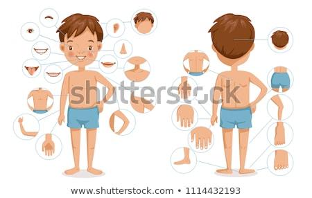 Humanos partes del cuerpo diagrama ilustración nino estudiante Foto stock © bluering