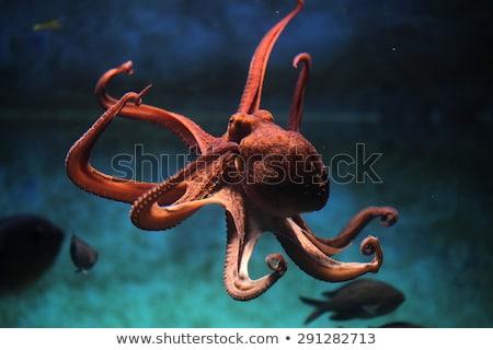 meduza · hal · úszik · tenger · illusztráció · víz - stock fotó © bluering