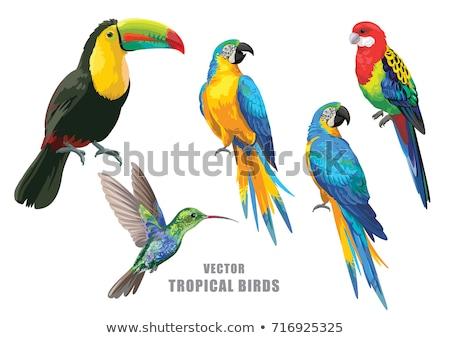 Vogel boom ontwerp kunst leuk veer Stockfoto © doddis