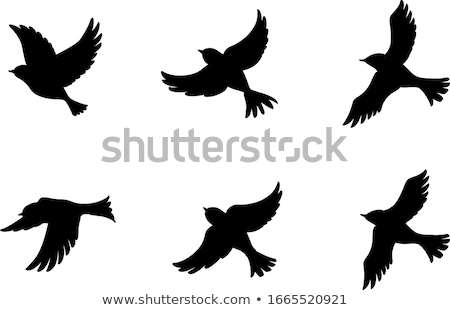 Dove silhouette stock photo © sifis