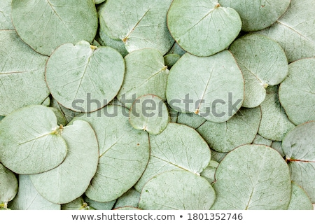 Leaf structure Stock photo © bluering