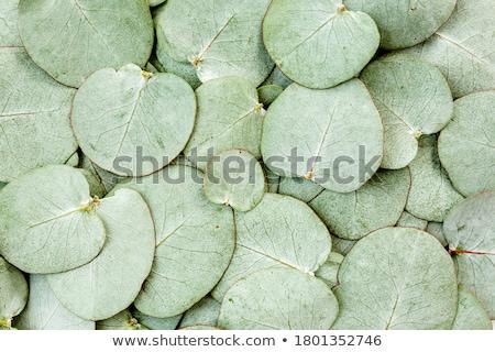 növény · sejt · struktúra · keresztmetszet · részletes · színes - stock fotó © bluering