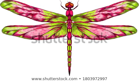 Green Dragonfly Stock photo © naffarts