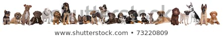 Stock photo: 22 Puppy Dogs In A Row