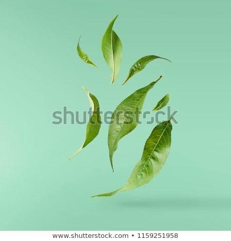 Uçmak yaprak yeşil bahar çim hayvan Stok fotoğraf © Kidza