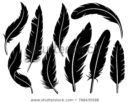 vector feather silhouette Stock photo © lilac