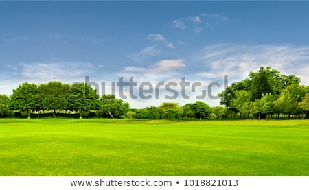 Stok fotoğraf: Green Landscape With Trees