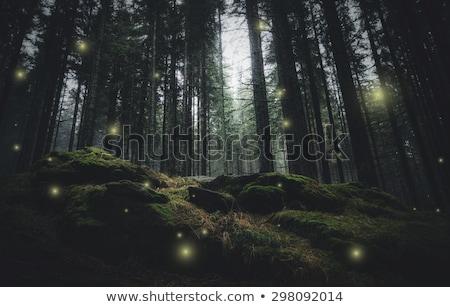 Jelenet erdő éjszakai jelenet éjszaka illusztráció fa Stock fotó © bluering