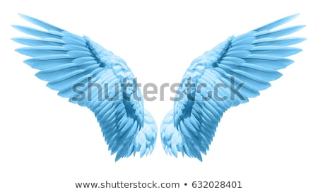 Blue angel wings Stock photo © blackmoon979