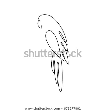 Papagáj rajz ikon vektor izolált kézzel rajzolt Stock fotó © RAStudio