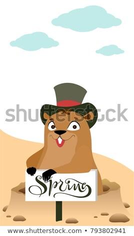 groundhog day marmot makes forecast early spring stock photo © orensila