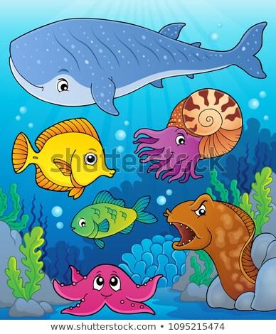 Mercan fauna konu görüntü doğa sanat Stok fotoğraf © clairev