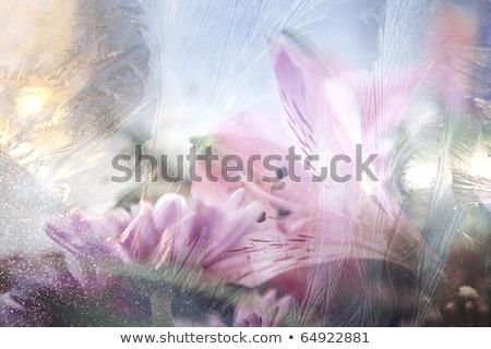 морозный · окна · природного · шаблон · зима · аннотация - Сток-фото © erierika