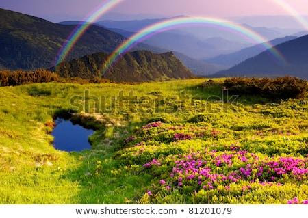 Summer landscape with rhododendron flowers and a rainbow in the  Stock photo © Kotenko
