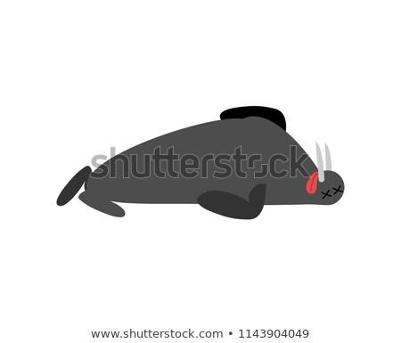 Dead walrus. Arctic and Antarctic wild beast is dead. Corpse sea Stock photo © popaukropa