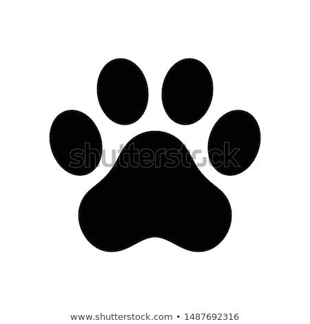собака след кость логотип икона вектора Сток-фото © blaskorizov