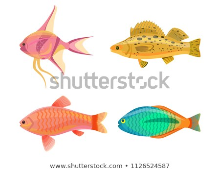 Сток-фото: Jewel Cichlid And Yellow Fish Vector Illustration
