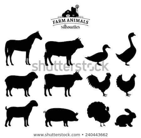 Varken silhouetten ingesteld graphics restaurant Stockfoto © Krisdog