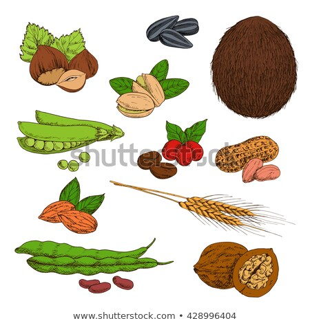common food ears of wheat icon vector isolated stock photo © robuart