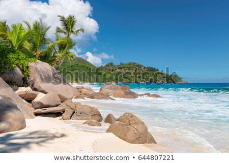 Tramonto isola Seychelles luce del sole palme spiaggia Foto d'archivio © AndreyPopov