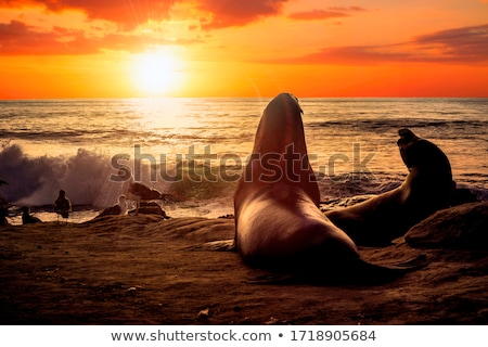Sun goes down over LA Stock photo © jsnover