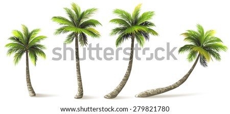 palm trees Stock photo © prill
